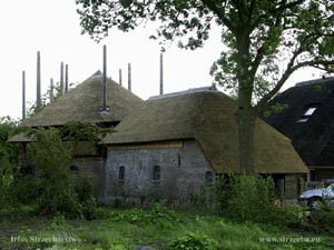 thatched roof, reed roof, reed covering on farm buildings