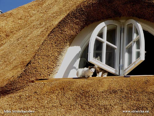 The thatched roof windows can open outwards - the implementation of the Irbis thatch