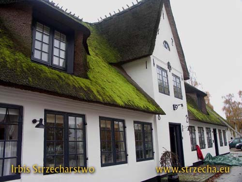 thatched roof - the moss lends the roof a charming grace, but it degrades the roofing