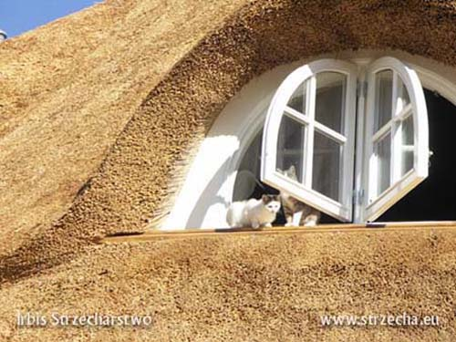 Thatched roof: cats love to bask on the window sill